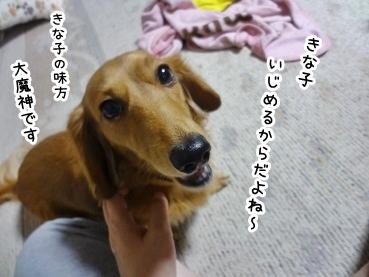 kinako1315.jpg