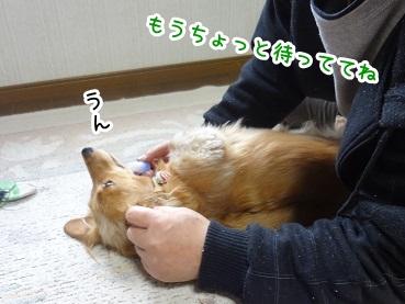 kinako1319.jpg