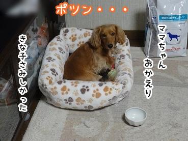 kinako1323.jpg