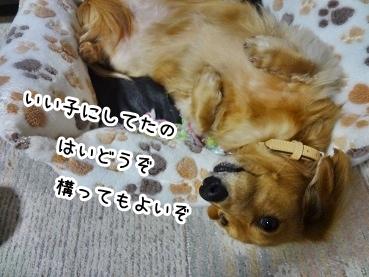 kinako1324.jpg