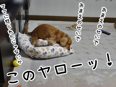 kinako1328.jpg