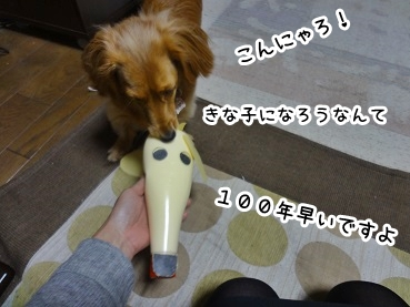 kinako1332.jpg
