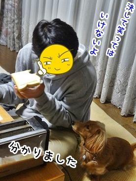 kinako1339.jpg