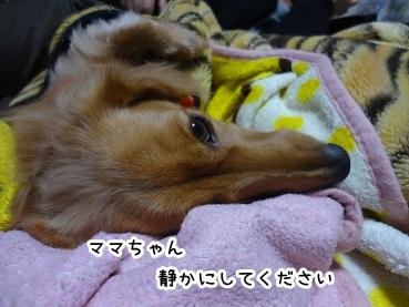 kinako1345.jpg