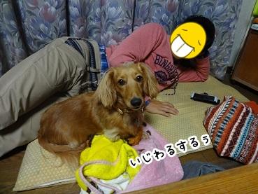 kinako1348.jpg