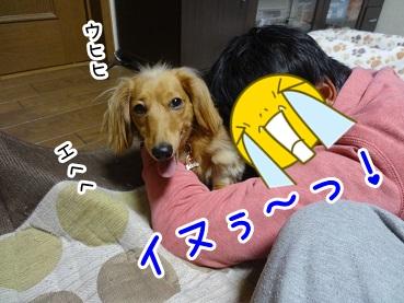 kinako1349.jpg