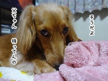 kinako1359.jpg