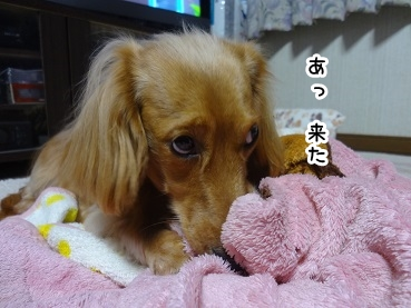 kinako1360.jpg