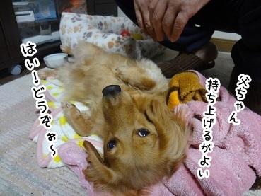kinako1362.jpg