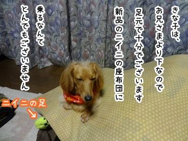 kinako1366.jpg