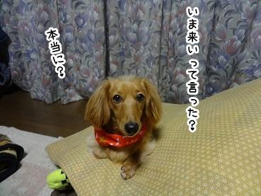 kinako1367.jpg