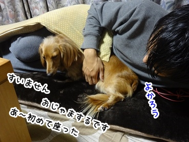 kinako1368.jpg