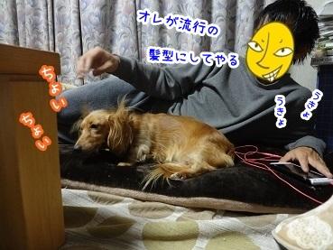 kinako1370.jpg