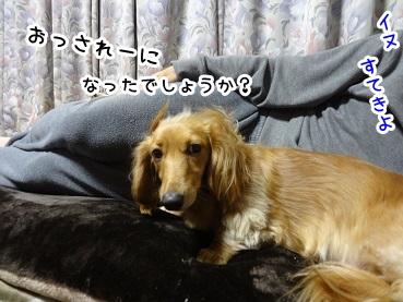 kinako1371.jpg