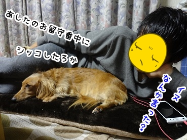 kinako1373.jpg