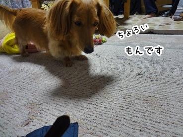 kinako1381.jpg