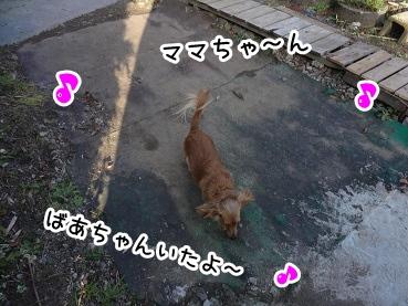 kinako1389.jpg
