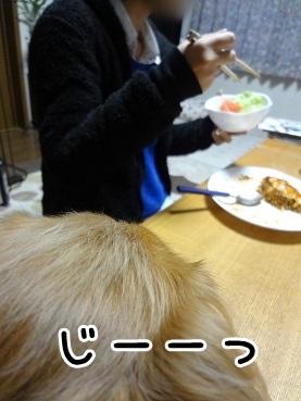 kinako1408.jpg