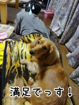 kinako1415.jpg