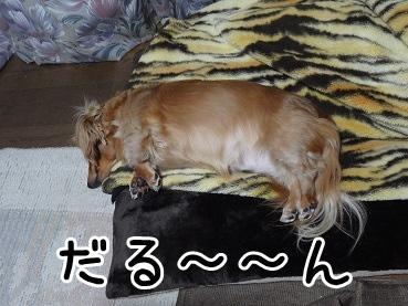 kinako1416.jpg