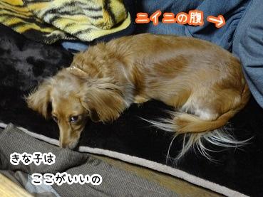 kinako1419.jpg