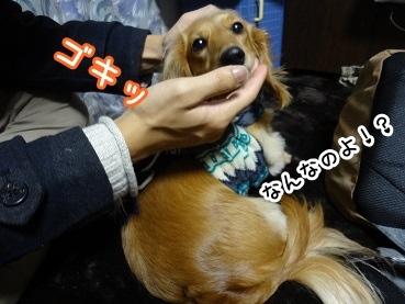 kinako1432.jpg