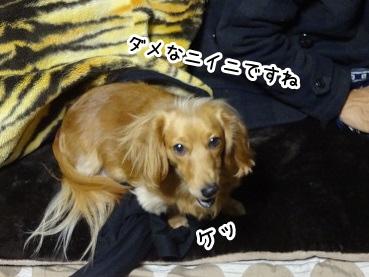 kinako1436.jpg