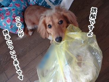kinako1447.jpg