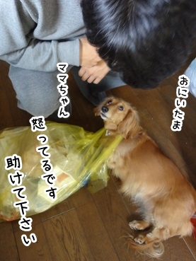 kinako1448.jpg