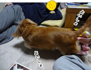 kinako1456.jpg