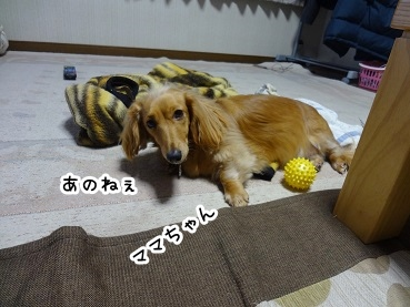 kinako1459.jpg
