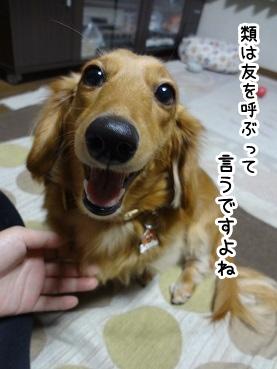 kinako1471.jpg