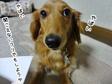 kinako1474.jpg