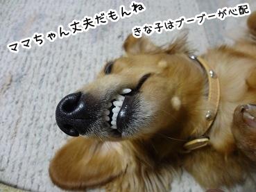 kinako1479.jpg