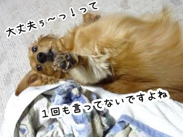 kinako1481.jpg