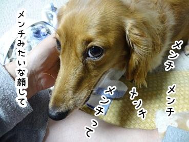 kinako1482.jpg