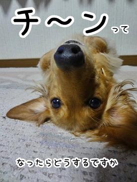 kinako1483.jpg