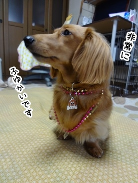 kinako1497.jpg