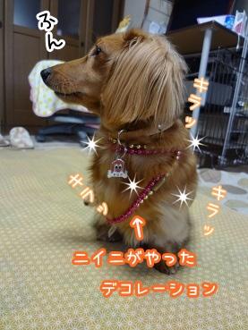 kinako1498.jpg