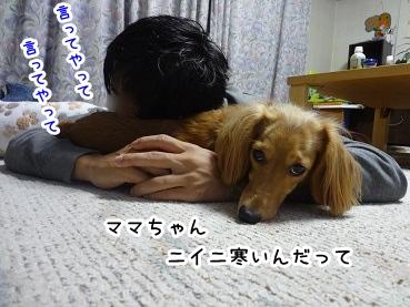 kinako1500.jpg