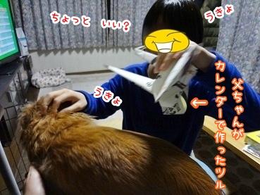 kinako1532.jpg