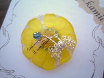 蝶クリサンセマム
