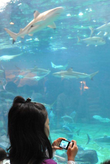 須磨水族館2_R