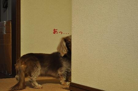 DSC_moco.jpg