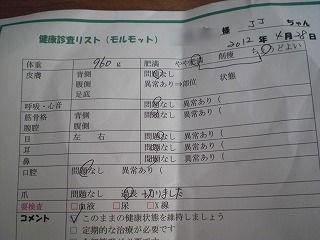 ココ_copy