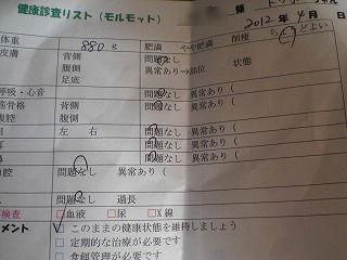 トッポ_copy