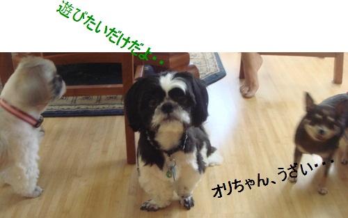 DSC03112-001moji.jpg