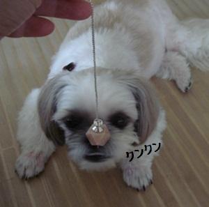 DSC03173moji.jpg