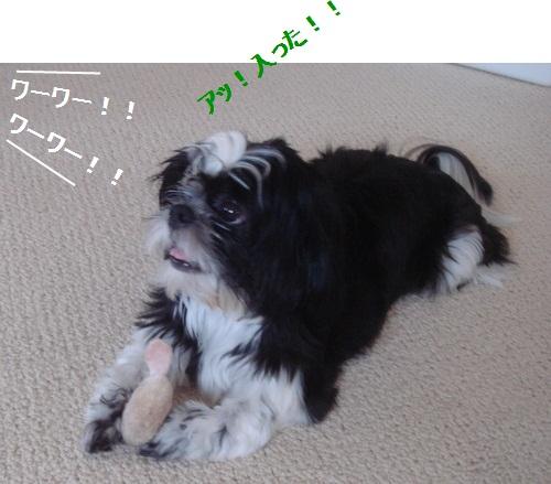 DSC03392moji.jpg