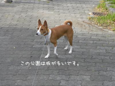 DSCN0320_convert_20120823203543.jpg
